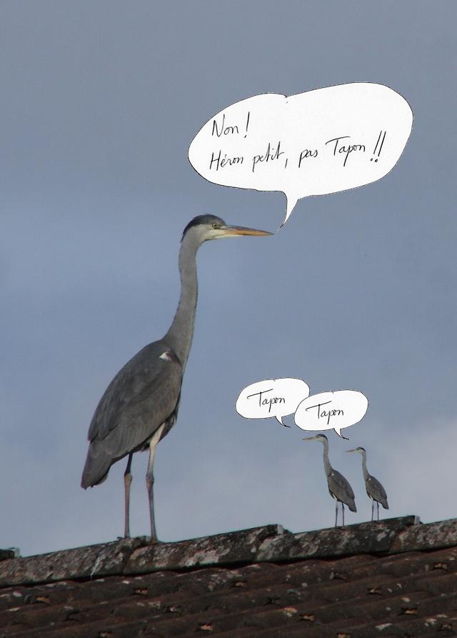 Paysages - Nature - Page 5 Heron_giti