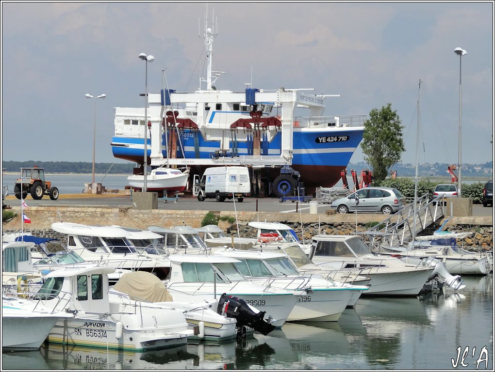 [Activité hors Marine des ports] LE CROISIC Port, Traict, Côte Sauvage... - Page 4 N-14%20Myosotis%20%20sous%20le%20portique%20S20V02545