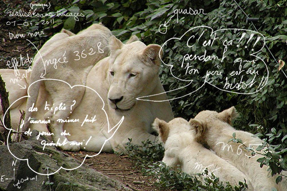 Ciel profond de printemps - Page 12 Triplet_lion_1_04_2011