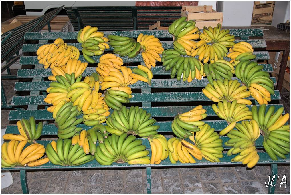 10 jours aux Acores (août 2013) J01-071%20Mercado%20march%C3%A9%20aux%20fruits%20bananes%20A43106