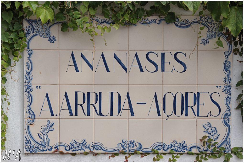 10 jours aux Acores (août 2013) J02-174%20Ananas%20A%20Arruda%20%20A43286